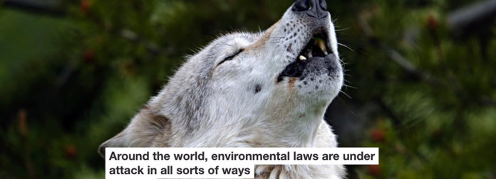 around the world, environmental laws are under attack in all sorts of ways