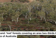 found: 'lost' forests covering an area two-thirds the size of australia