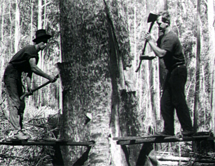 Image of timber cutters