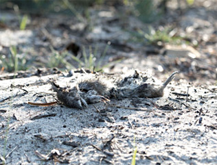 land clearing has issues for animals