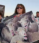The Live Export Trade Is Unethical. It Puts Money Ahead Of Animals' Pain