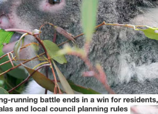 Winn for residents koalas and council planning Header