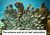 The Science And Art Of Reef Restoration