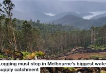 Logging must stop in large melb catchment