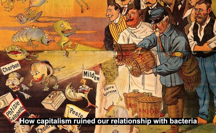 Capitalism and bacteria Header