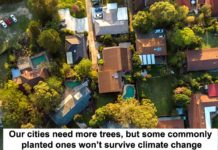 our cities need more trees, but some commonly planted ones won't survive climate change