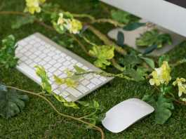 Keyboard and mouse on a grass