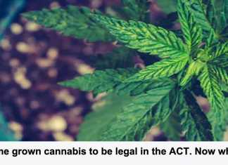 home grown cannabis to be legal in the act. now what?
