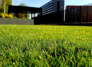 6 excellent tips to create the gorgeous lawn you've always dreamed about