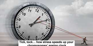 tick, tock… how stress speeds up your chromosomes' ageing clock