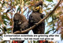 conservation scientists are grieving after the bushfires – but we must not give up