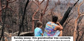 sunday essay: this grandmother tree connects me to country. i cried when i saw her burned