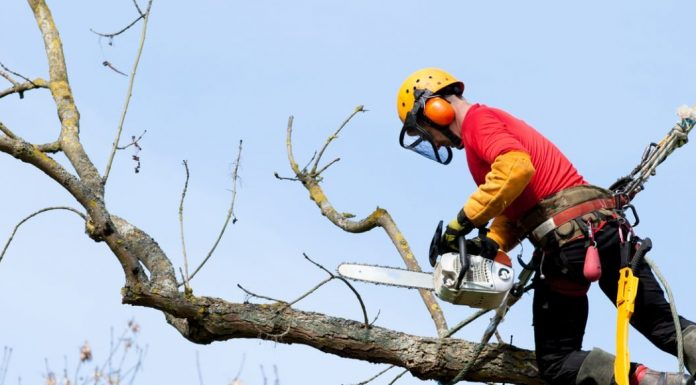 choosing the best perth tree care service