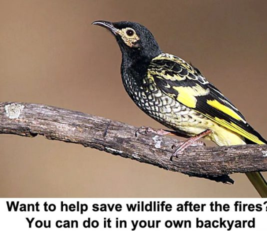 want to help save wildlife after the fires? you can do it in your own backyard