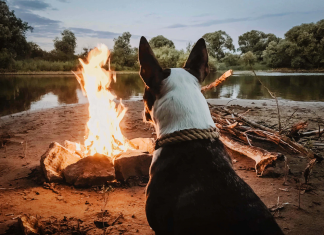 camping with dogs: 5 pet-friendly camping spots near brisbane