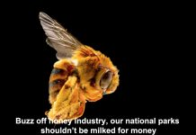 buzz off honey industry, our national parks shouldn't be milked for money