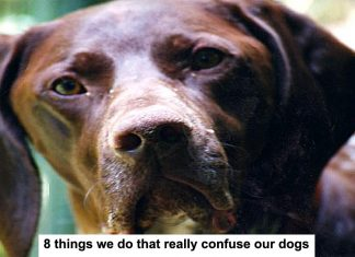 8 things we do that really confuse our dogs