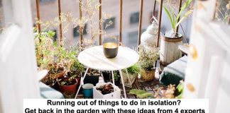 running out of things to do in isolation? get back in the garden with these ideas from 4 experts