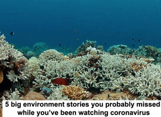 5 big environment stories you probably missed while you've been watching coronavirus