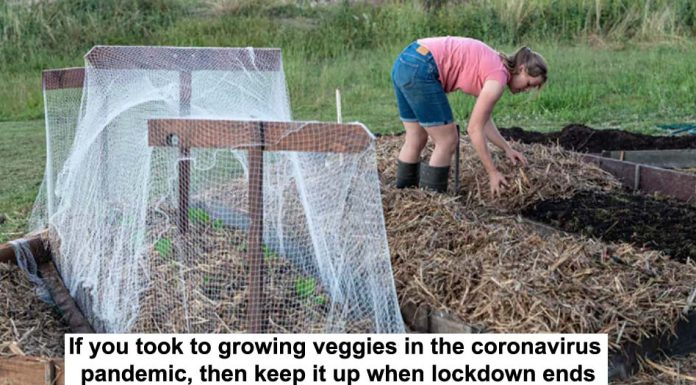 if you took to growing veggies in the coronavirus pandemic, then keep it up when lockdown ends