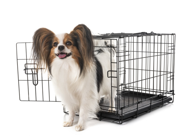 7 types of dog travel crates & carriers