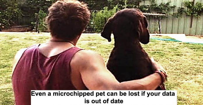 even a microchipped pet can be lost if your data is out of date