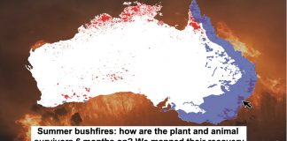 summer bushfires: how are the plant and animal survivors 6 months on? we mapped their recovery