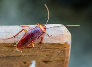 4 tips to help keep cockroaches out your sydney house