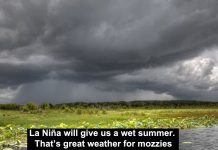 la niña will give us a wet summer. that's great weather for mozzies
