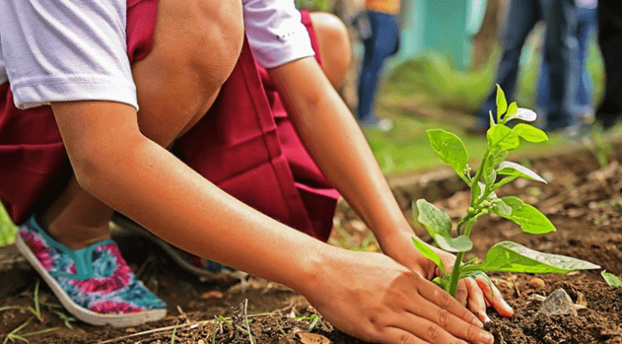 transplanting trees – an easy to follow how to for anyone!