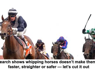research shows whipping horses doesn't make them run faster, straighter or safer — let's cut it out