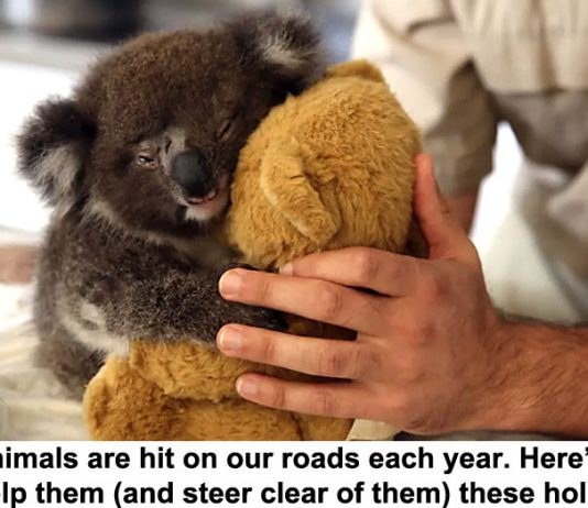 10 million animals are hit on our roads each year. here's how you can help them (and steer clear of them) these holidays