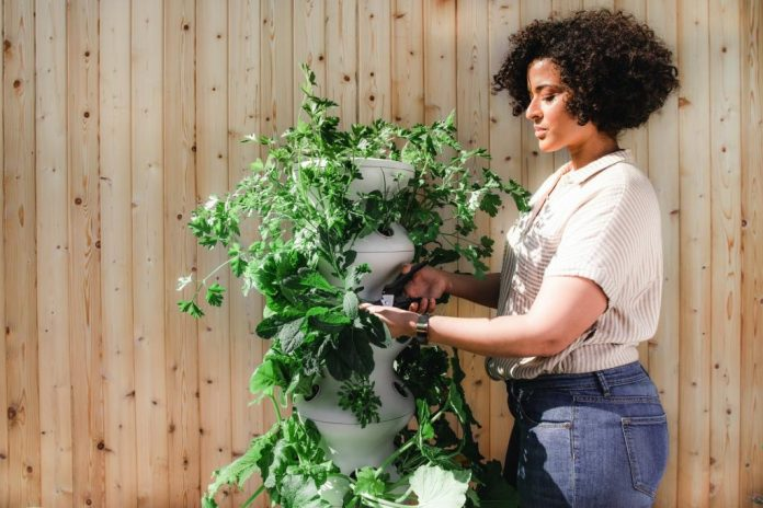 how growing your own food can benefit the environment