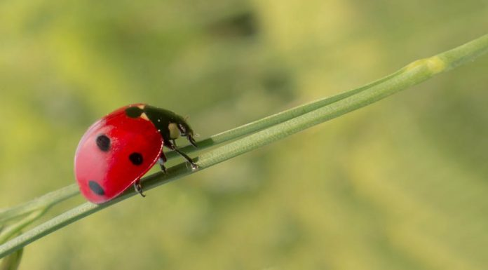 4 pest control resolutions for every aussie homeowner