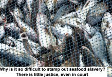 why is it so difficult to stamp out seafood slavery? there is little justice, even in court