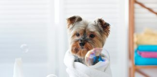 accessories for your beloved pet