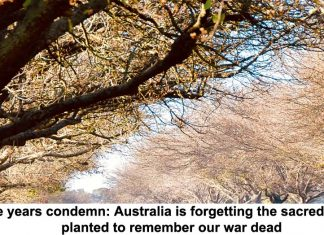 the years condemn: australia is forgetting the sacred trees planted to remember our war dead