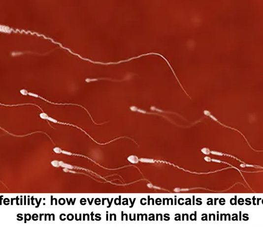 male fertility: how everyday chemicals are destroying sperm counts in humans and animals