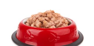 quality pet food in qld: the trust behind the industry