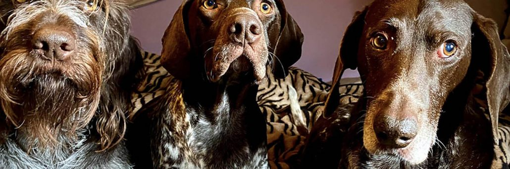 why dogs don't care for being groomed (and for the love of dog don't snip their whiskers)
