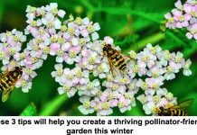 these 3 tips will help you create a thriving pollinator-friendly garden this winter