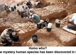 homo who? a new mystery human species has been discovered in israel