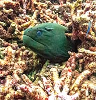 australian government was 'blindsided' by un recommendation to list great barrier reef as in-danger. but it's no great surprise