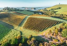 northland region: the birthplace of nz wine industry