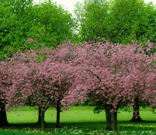 5 tips to prepare your trees for spring season
