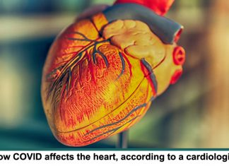 How COVID affects the heart header