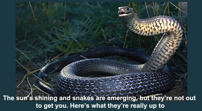 the sun's shining and snakes are emerging, but they're not out to get you. here's what they're really up to