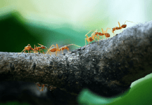how an expert ant control adelaide company can help